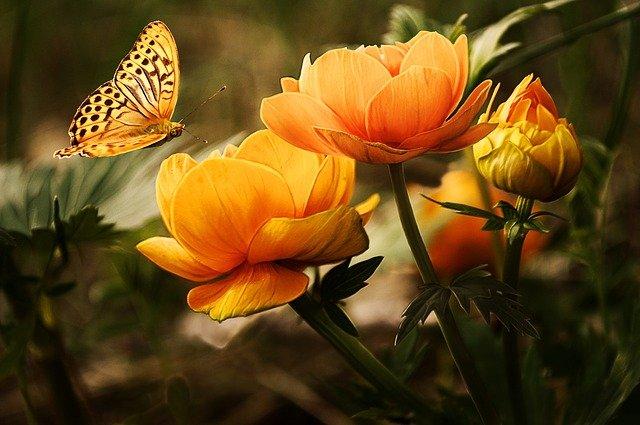 kwiaty ogrodowe kwitnące cały rok